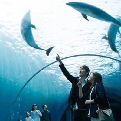 「《同年代》×《水族館》で距離も縮まる♡ グループ婚活in海遊館 」の画像1枚目