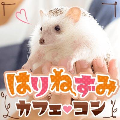 「《動物カフェコン♥ハリネズミ編》動物好きの優しい方大集合♡」の画像1枚目